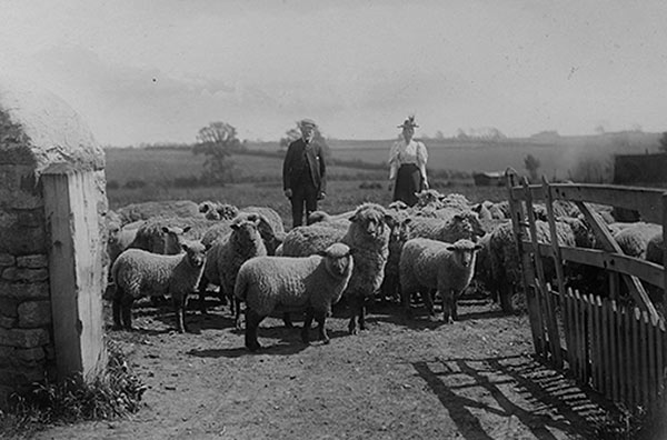 Mr & Mrs Jesse Fox, early 1900s.  View across the field looking towards the Wold