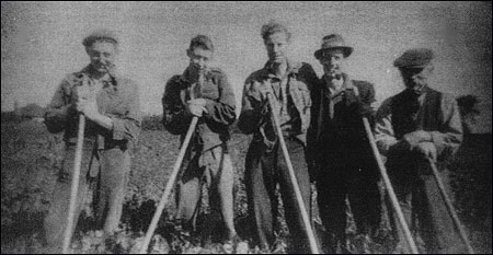 Employees of Eric Stopps of Laurel Farm hoeing sugar beet in Home Field, Cranford Road c1949.  Nigel Patrick, Bob Farrow, Paul Narr (German ex-POW), Arthur Rylot and Sam Austin