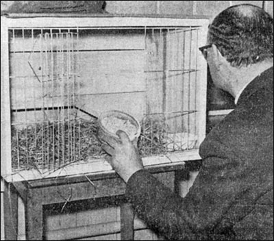 The Headmaster, Mr Pringle, looks at the empty cage where the guinea pig Gussy was tortured before being drowned.