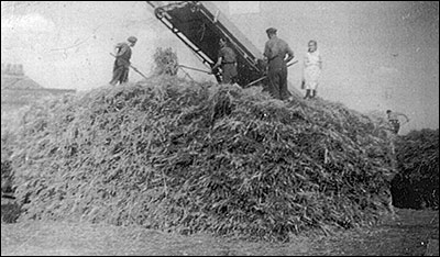 Threshing early 1950s aat Willows Farm, Cranford.  Pictured are Ray Annis, Jack Craddock, Edgar Denton and his daughter, Mary Denton