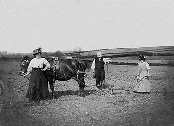 Edward, Topsy and Fanny Miller at work in the potato field