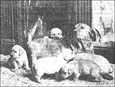 Photograph showing mother dog with pups