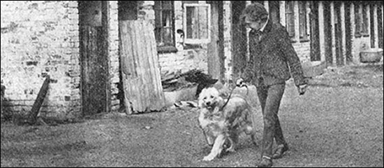 Photograph showing Breeder, Mrs Harpur, displaying one of her top dogs